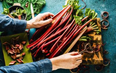 La Rhubarbe : Un légume peu calorique et bon pour la santé